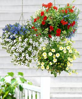 Blooming Hanging Baskets