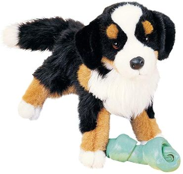 Miranda Bernese Dog